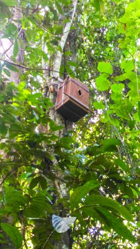 Hornbill Nesting Box in SRL